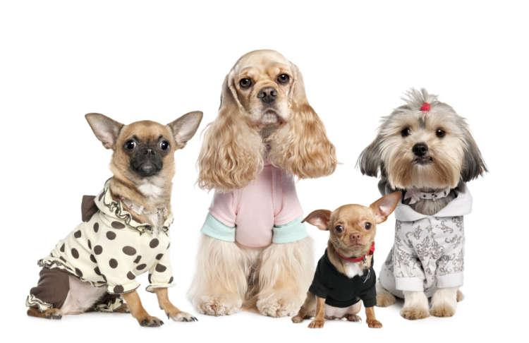 犬の服の用途やメリット、選び方や注意点など