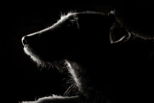 犬のお葬式について。ペットを火葬する際はどうする?
