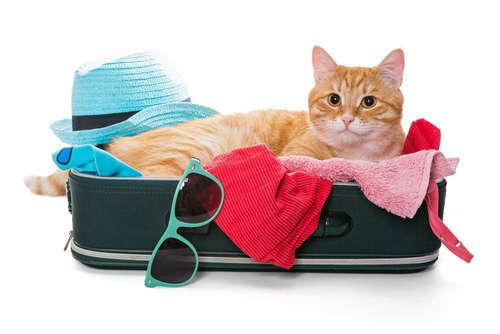猫と一緒に旅行に行こう! 注意点は?
