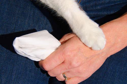 つらい猫のペットロス。ペットロスの症状や立ち直り方について
