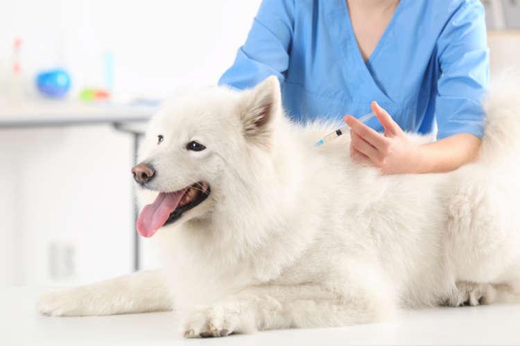 """""""狂犬病予防接種""""はもう受けた? 注射の時期・費用・注意点をおさらい【基本編】"""