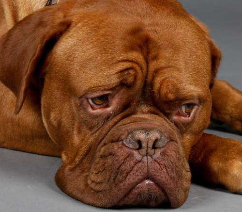 犬がため息をつくのはなぜ? ため息をつく犬の心理