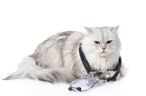 【獣医師監修】猫の平熱って何度? 適正体温と測り方