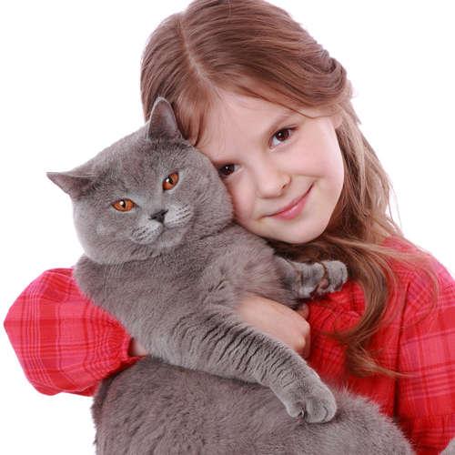 【獣医師監修】猫には生理がない!? 妊娠のメカニズムと出血があった場合の注意点
