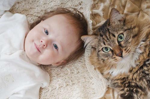 【獣医師監修】猫と赤ちゃん、同居する際に気を付けるべきことは?