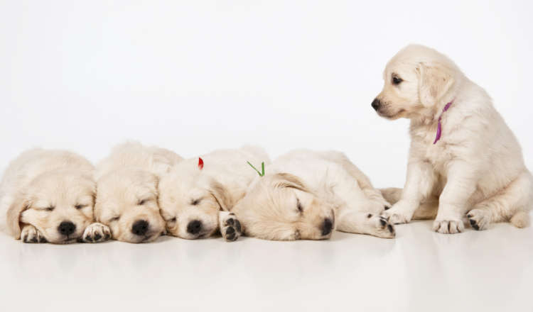 犬の睡眠時間ってどのくらい? 年齢と種類の関係