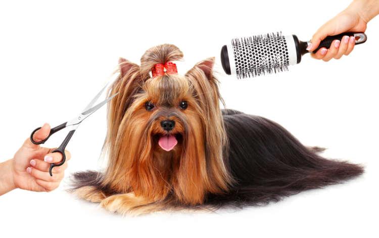 【獣医師監修】犬のトリミング、しないとどうなる? トリミングの頻度とやり方
