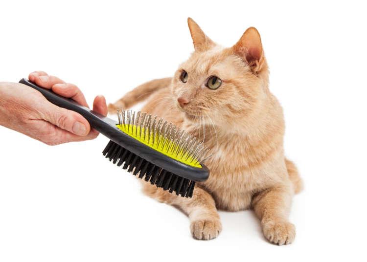 【獣医師監修】猫のブラッシング、しないとどうなる?  ブラッシングの頻度と方法