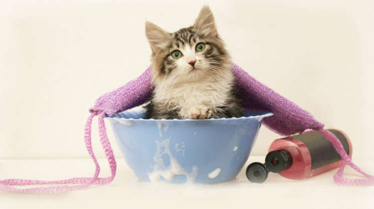 猫にシャンプーって必要? シャンプーの頻度とやり方