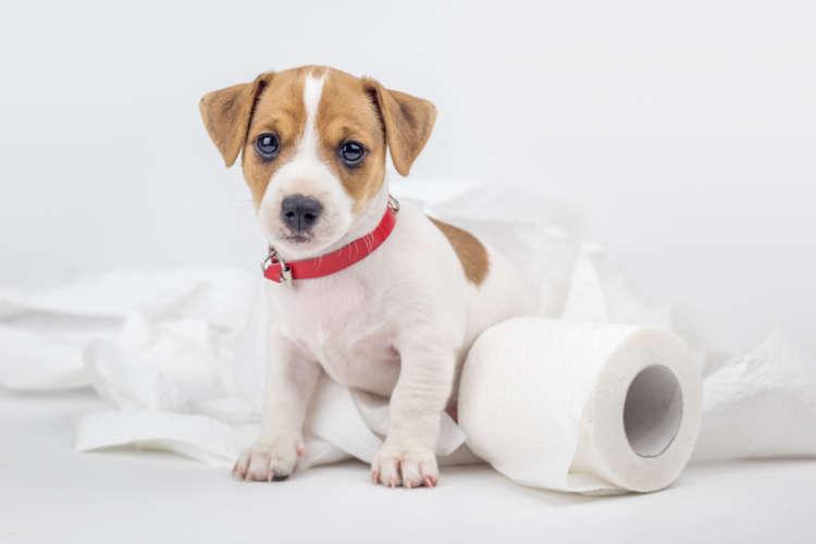 【獣医師監修】犬が糞を食べる!? 食糞の理由とその対策について