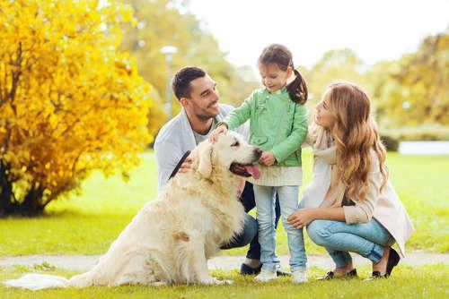 犬の里親になる・犬の里親を探す方法について。