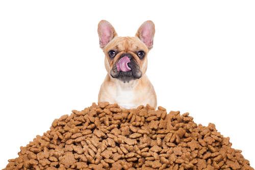 【獣医師監修】犬によいものを与えたい! ドッグフードの選び方