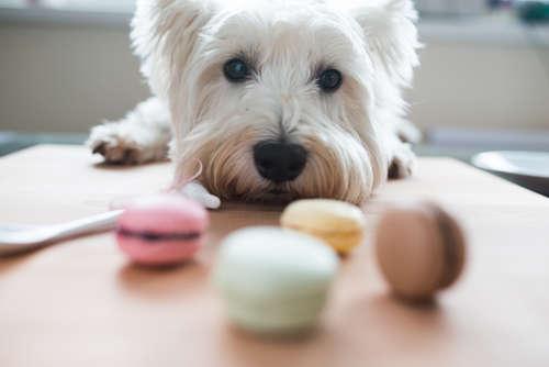 【獣医師監修】犬のおやつの種類と与え方、しつけへの利用について