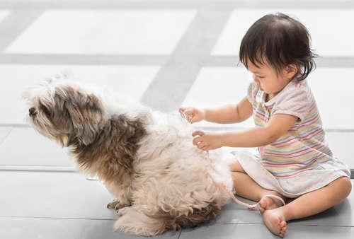 【獣医師監修】犬のダイエット、その方法や注意点について