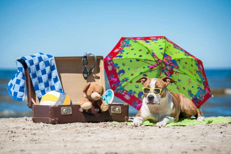 この夏はどこへ行く?  犬と一緒に楽しむ2017年7月~9月の関東近郊イベント