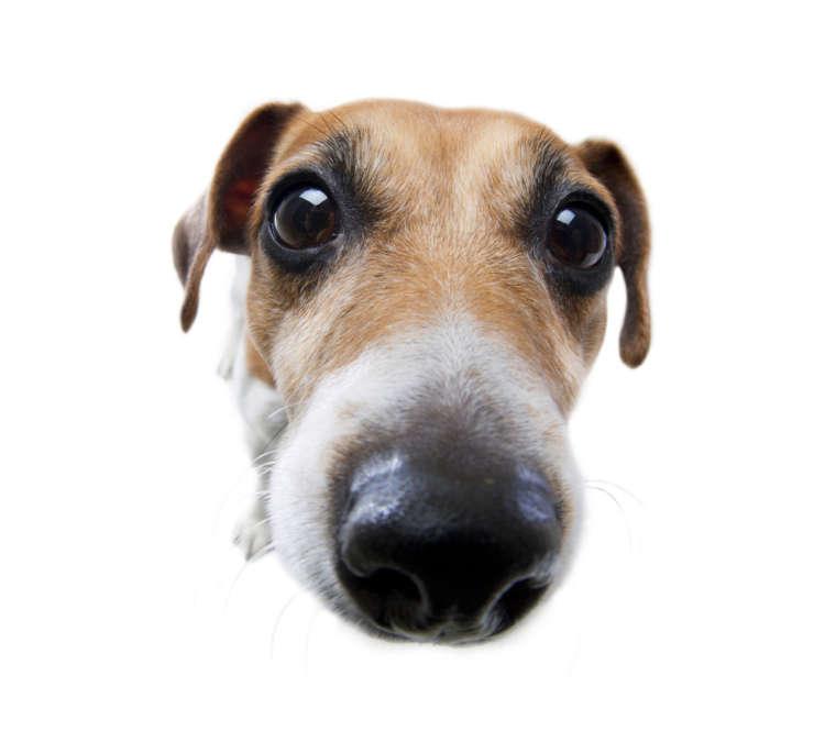 こんな時は病気のサイン? 犬の鼻の状態とサインについて