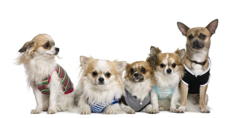 愛犬にオーダーメイドの洋服を! 服型紙から作る簡単手作り洋服