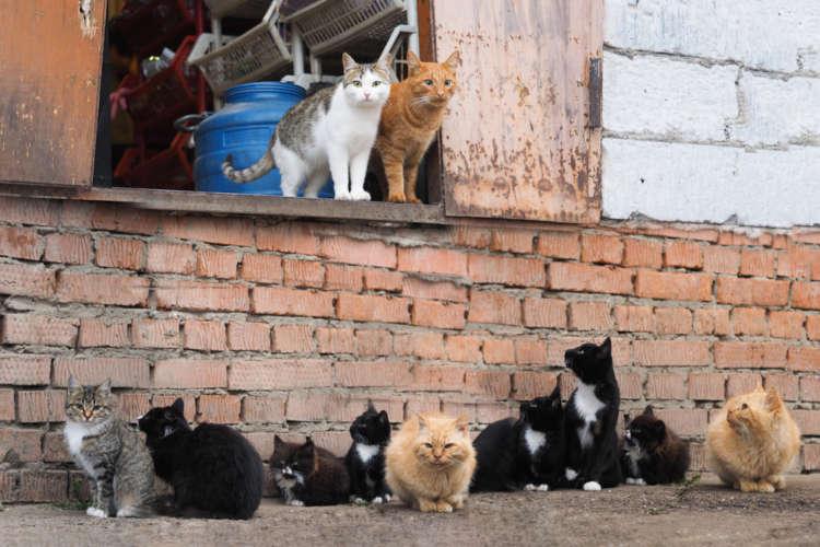 捨て猫・保護猫を引き取るには? 引取先、申請方法、準備すべきこと