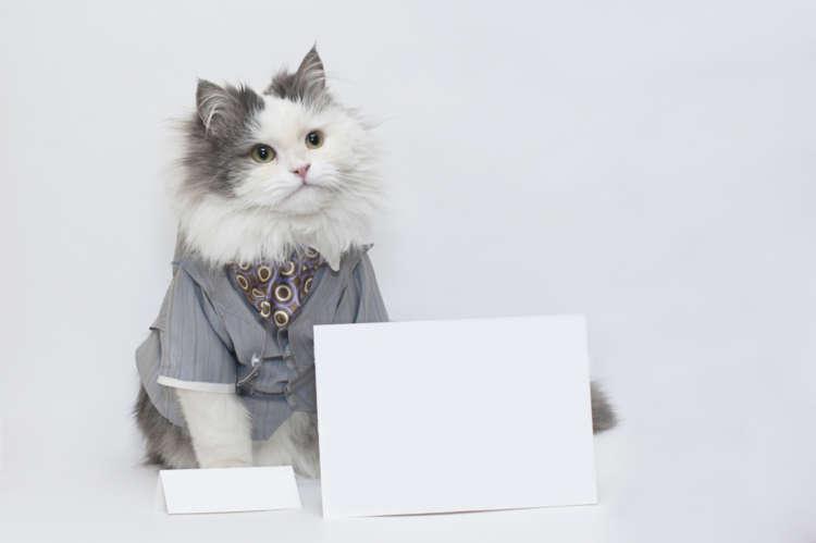 猫の服の用途やメリット、選び方や注意点など