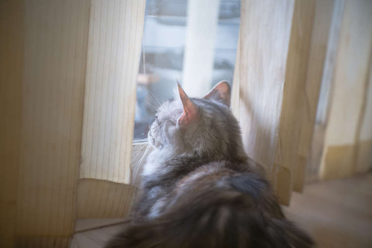 これで夏の旅行も安心! 猫が快適・安全に過ごせるお留守番グッズ&活用術