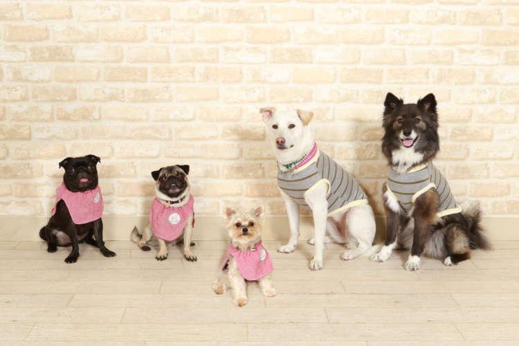 【花梅トライ! トライ!!】犬の保育園って何をするところなの?《体験入園編》