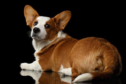 犬のおならって気にするべき? 原因や考えられる病気と対策について