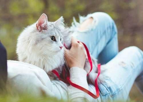 【獣医師監修】猫に散歩って必要? 適切な頻度や時間、 距離、知っておくべきマナーとは?