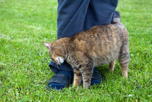 思わずぎゅっとしたくなる! 猫が頭や体をすりすりしてくるのはどうして? 可愛い仕草の理由と心理