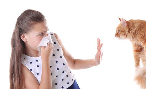 【獣医師監修】猫を飼う前に知っておきたい! 猫アレルギーの判定方法、症状、治療法について
