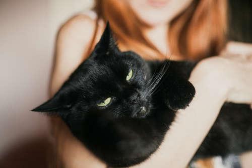 猫がなついてくれない! なつかない時の対処法