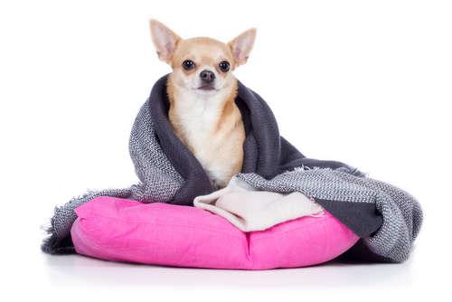 犬が震える。震える原因や考えられる病気、治療法、予防法について