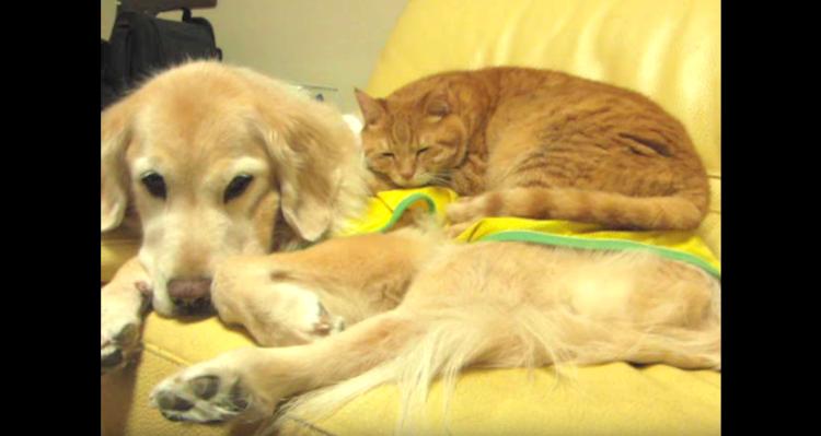 【わんこベッドでおやすみ中】大胆な猫さんを受け入れるワンコ。そんな2匹の姿があたたかくて和む〜♡