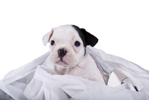 犬の血便。血便の原因や考えられる病気、治療法、予防法について