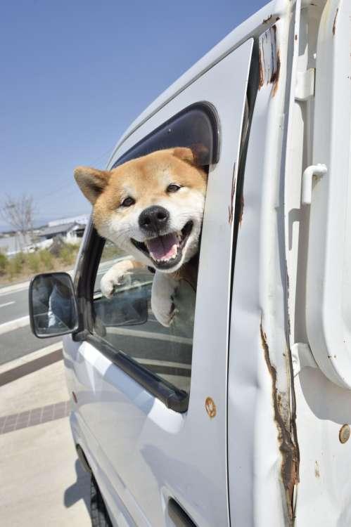 日本犬アーカイブ 日本犬と乗り物編 まる子の母とジュウザの飼い主の勝手気ままな犬マニアコーナー♥