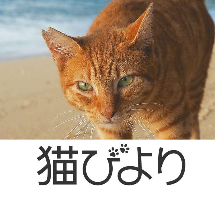 サムネイル: 猫びより編集部