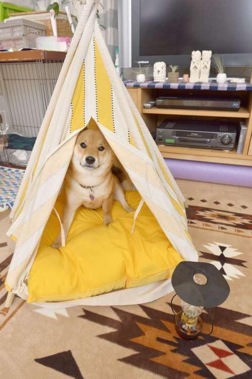 今度のお休みキャンプに行けたら