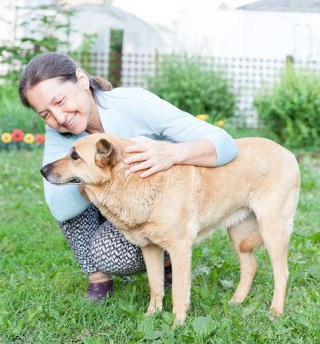 犬のフケ。フケの原因や考えられる病気、治療法、予防法について