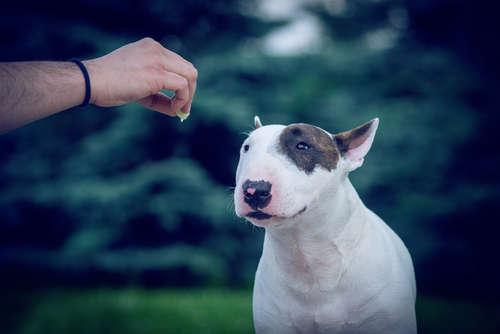 【獣医師監修】犬がご飯を食べない。原因や考えられる病気と対策について