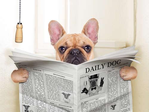 犬の下痢が止まらない。原因や考えられる病気、治療法、予防法について