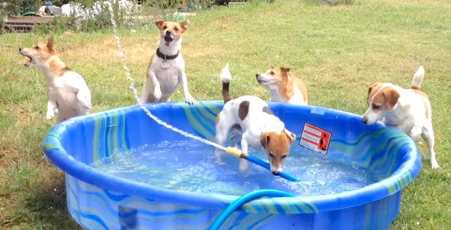 プールに水を溜めている間に… ワンコたちが見つけた『お水の楽しみ方』が大迫力だった(*´艸`*)!