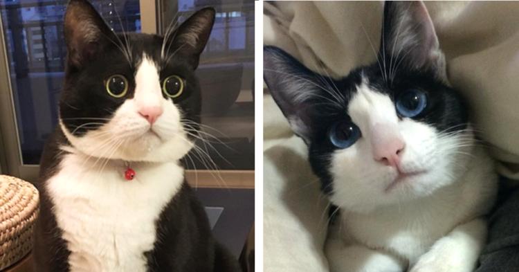 【ハチワレ猫が大集合ッ♡】愛嬌あふれるハチワレ猫たちの可愛さに、惚れ込む画像集…(*´ェ`*) 8枚