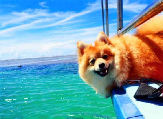 【7月17日は海の日】泳いだり・走ったり・ほったり♡ 海を思いっきり楽しむワンコたち(^O^)11枚