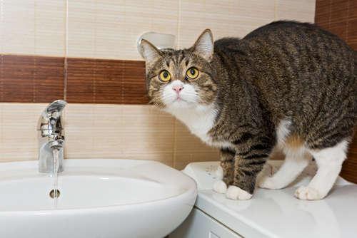 猫の上手な水の飲ませ方とは? よく水を飲む時・まったく飲まない時の注意点