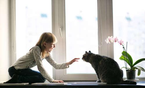 猫にとって過ごしやすいお部屋とは? 工夫したいポイントと注意点について