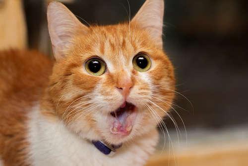 猫が臭い。ニオイの原因や考えられる病気、治療法、予防法について