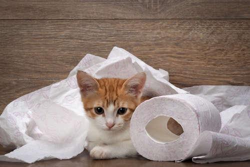 猫の血便。 血便の原因や考えられる病気、治療法、予防法について