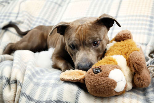 犬・愛のオーダーメイドぬいぐるみってどんなものなの?