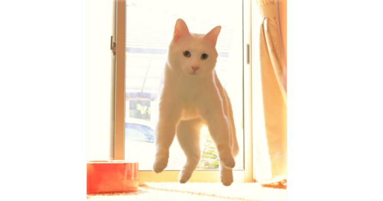 【無重力ネコ】まるで宇宙にいるみたい!?フワフワ浮かぶニャンコから目が離せない(´艸`*)♡ 12枚