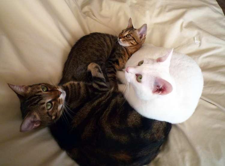 どうすればうまくいく? 猫の多頭飼い。新入りの受け入れ準備から日常生活まで