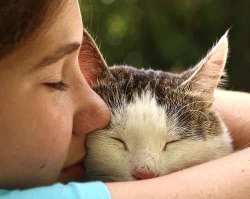 猫が抱っこを嫌がる! 抱っこの慣らし方と正しい抱き方